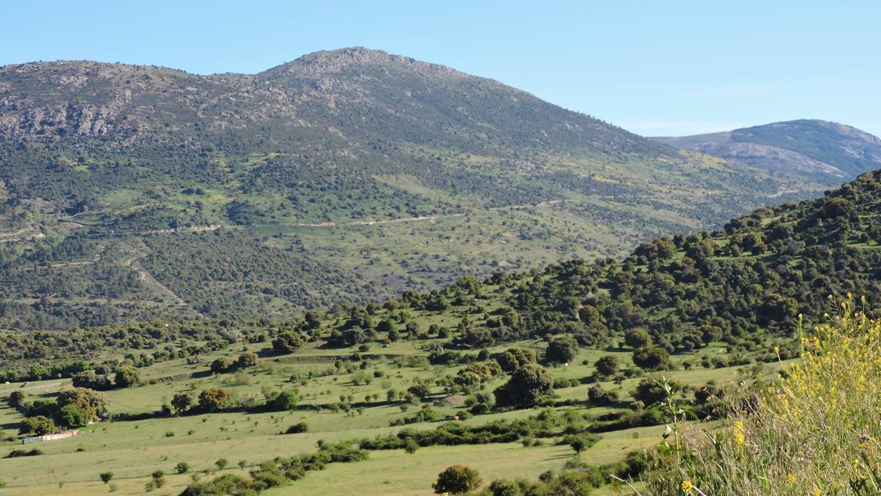 Montes preservados vista